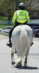 Percheron as Mounted Police Horse