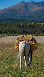 Packing the Pack Horse
