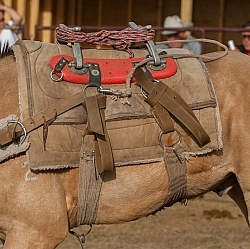 Pack Horse Tack