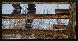 Sittin on the Fence 31 x 13.5 Canvas wrap Espresso Frame LE to 40  750.00
