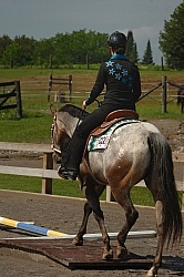 Junior Trail Class Appaloosa