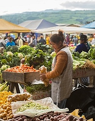 Local Market in Aloag, Ecuador