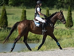 Bitless Bridle Eventing