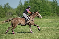 Ashley Hensman and Hott Aventador  Leg Protection Eventing