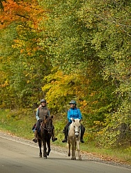 Fall colors  with The Vermont Icelandic Horse Farm