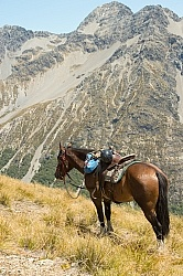 Riding in Ahuriri Conservations Area with Wild Women Expeditions and Adventure Horse Trekking New Zealand
