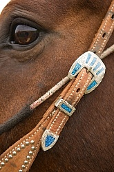 Western Bridle with Bit