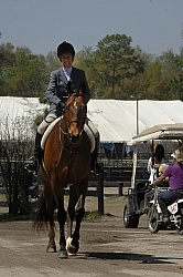 Hunter at Show