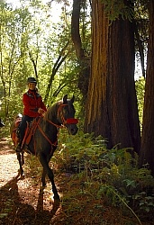 Ricochet Ranch Riding Through the Redwood Forest