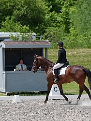 Dressage Lower Level in Ring