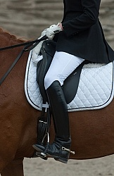 Dressage Apparel