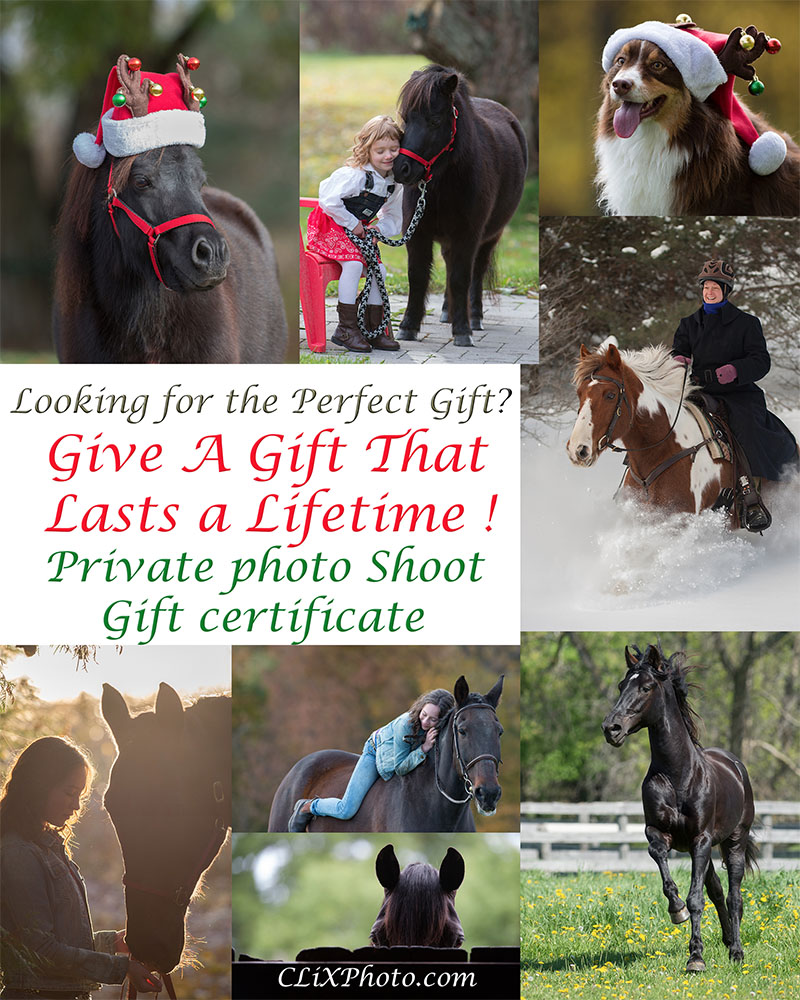 Top Equestrian Gift Idea for Christmas from CLiX Photography - Horse Portraits Photographer Session