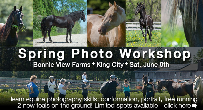 Horse Photography Workshop Ontario Clix Photography