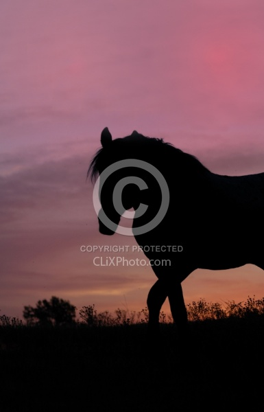 Nokota Horse Sunset Silhouette