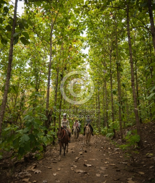 The Teak Forest